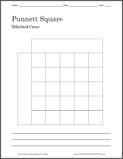 Punnett Square Dihybrid Cross - Worksheet is free to print (PDF file).