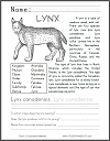 Lynx Informational Text Worksheet