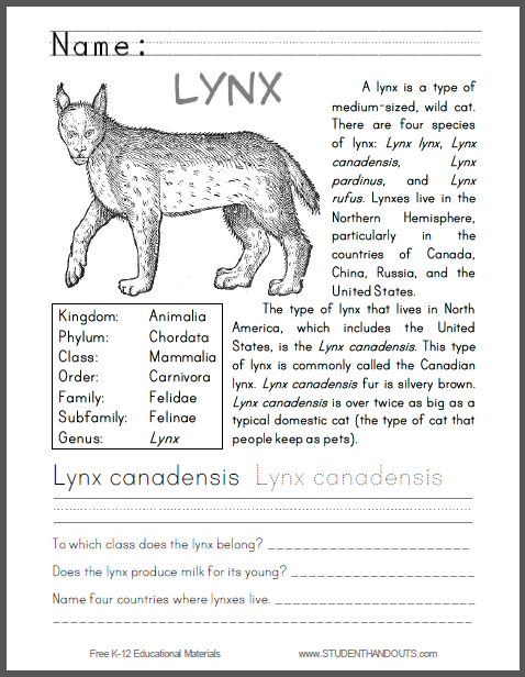 Lynx Canadensis Primary Worksheet - Free to print (PDF file) for lower elementary Science students.