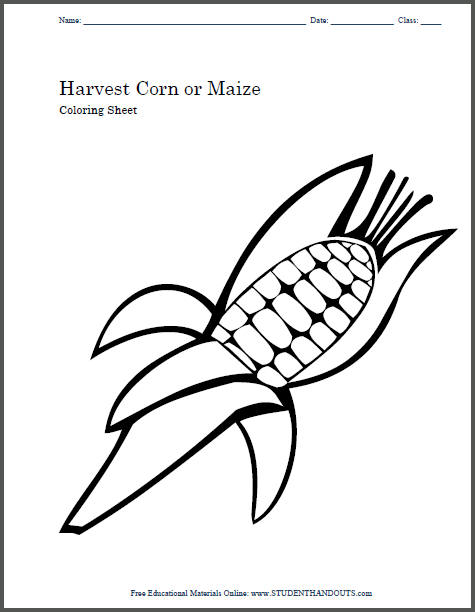 Harvest Corn or Maize Coloring Sheet for Kids or Craft Template