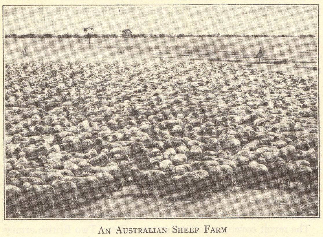 An Australian sheep farm, circa 1920.