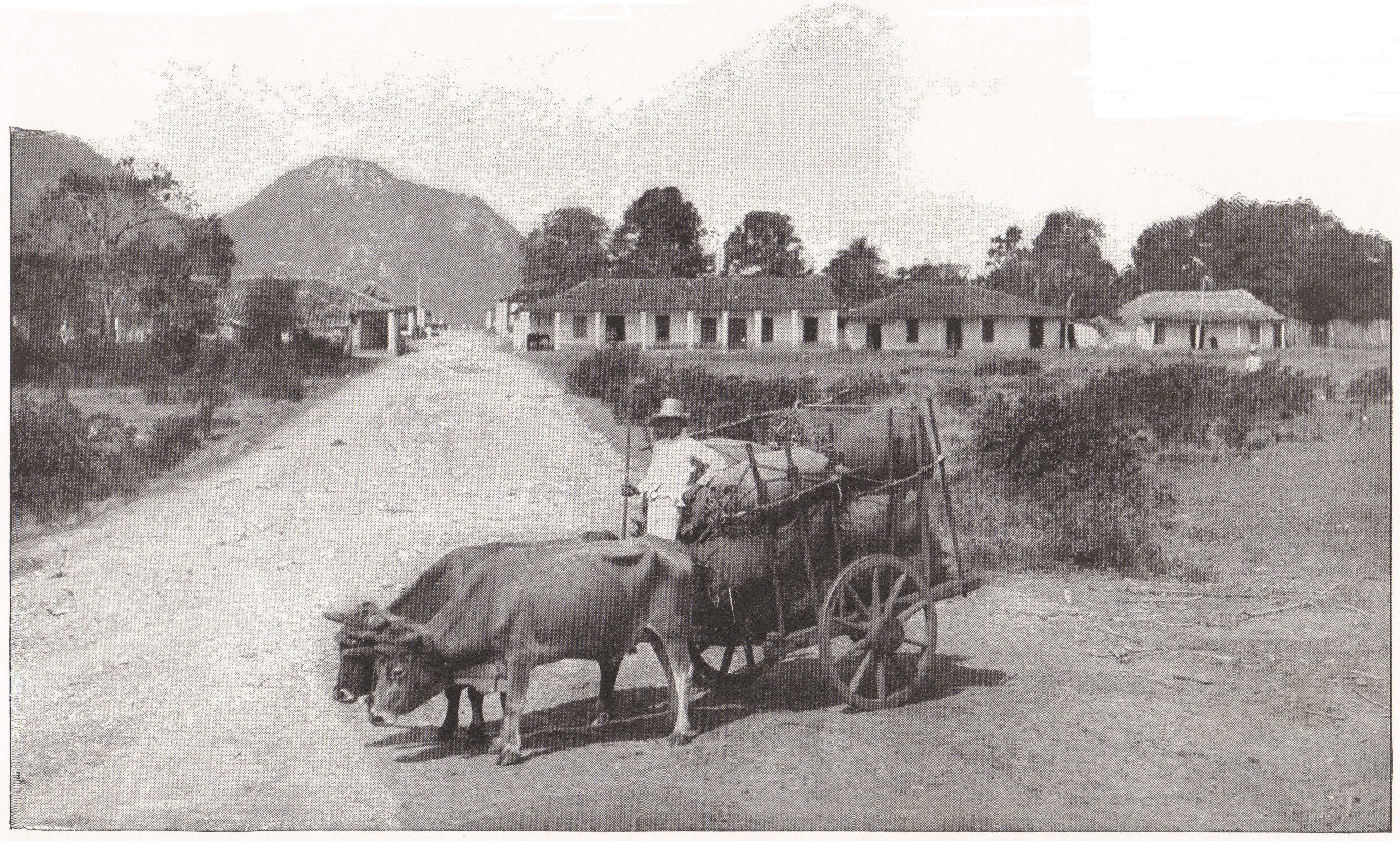 Cart Pulled by a Pair of Oxen, Cuba (1898)