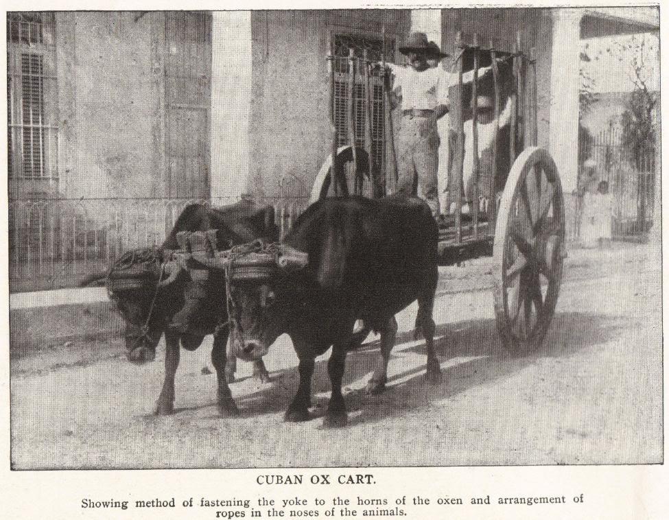Cuban Ox Cart, 1898