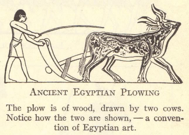 Ancient Agriculture: Egyptian Plowing