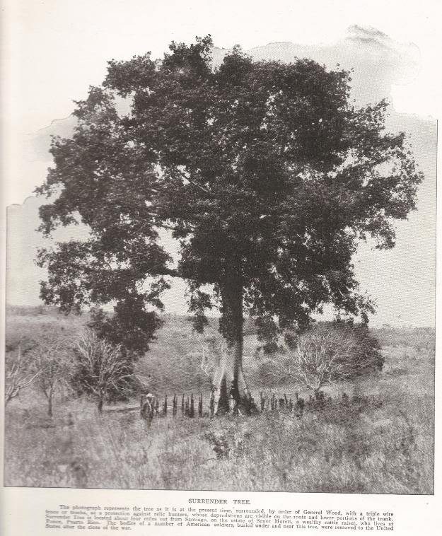 SURRENDER TREE: The photograph represents the tree as it is at the present time, surrounded, by order of General Wood, with a triple wire fence or trocha, as a protection against relic hunters, whose depredations are visible on the roots and lower portions of the trunk. Surrender Tree is located about four miles out from Santiago, on the estate of Senor Morett, a wealthy cattle raiser, who lives at Ponce, Puerto Rico. The bodies of a number of American soldiers, buried under and near this tree, were removed to the United States after the close of the war.