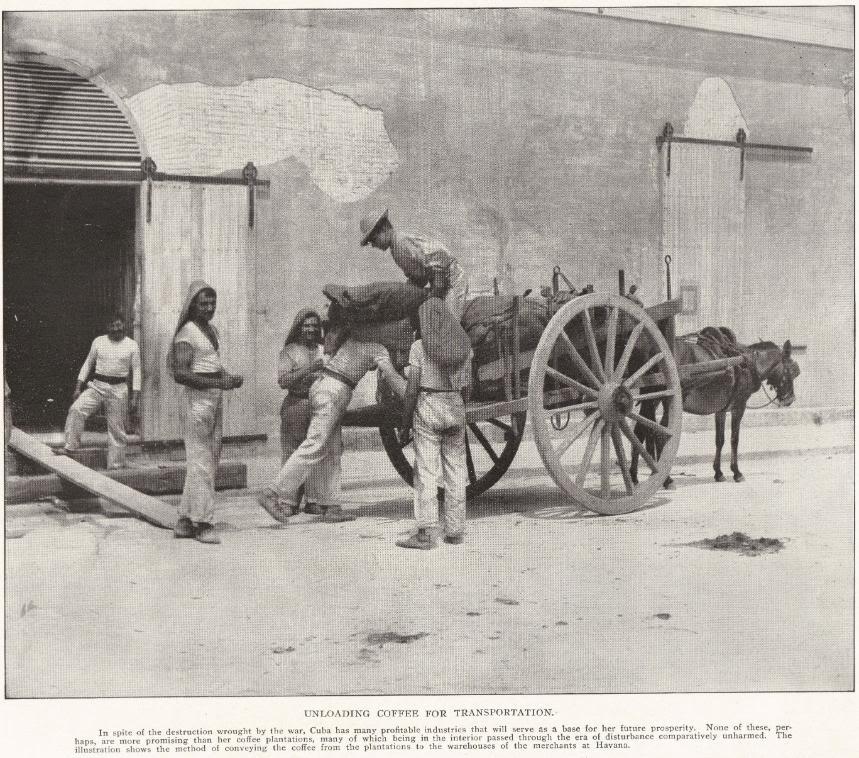 Unloading Coffee for Transport in Cuba, 1898