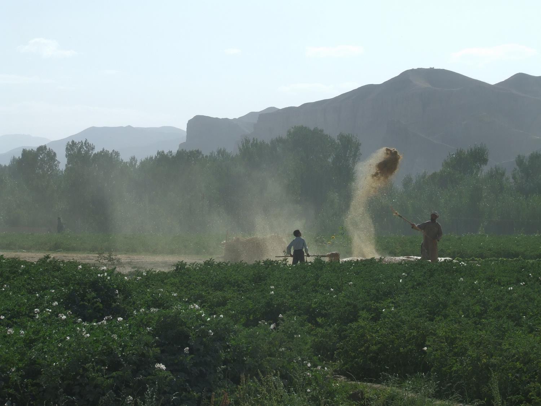 Winnowing in Afghanistan
