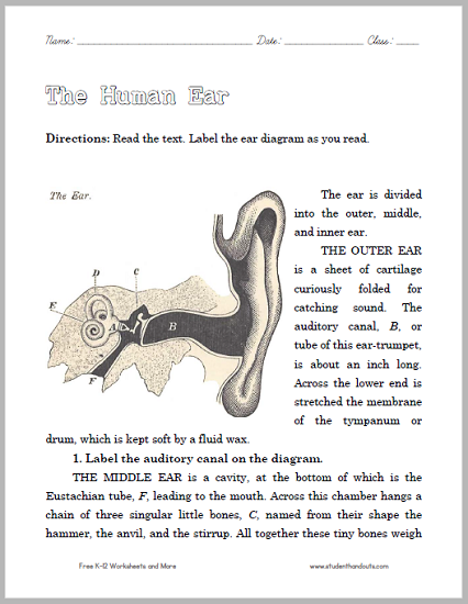 Read about and Diagram the Human Ear - Worksheet is free to print (PDF file).