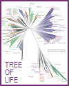 Tree of Life Published by Nature, 2016