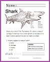Shark Worksheet for Lower Elementary