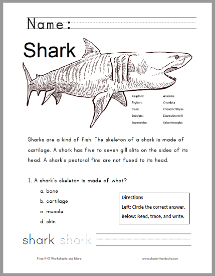 Shark Worksheet for Lower Elementary | Student Handouts