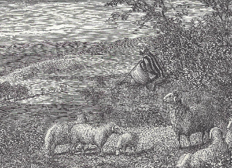 Old Testament Shepherd