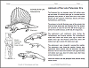 cenozoic animals coloring pages - photo#15